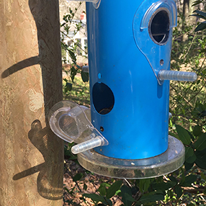 blue bird feeder in spring with broken perch